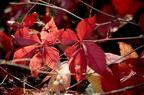 Nature et Flore